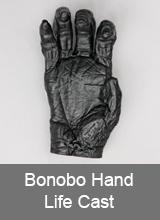 Bonobo Hand Life Cast