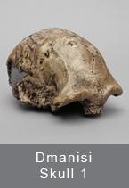 Dmanisi Skull 1