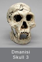 Dmanisi Skull 3