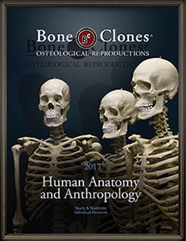 2017 Human Catalog