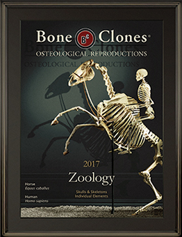 2017 Zoology Catalog
