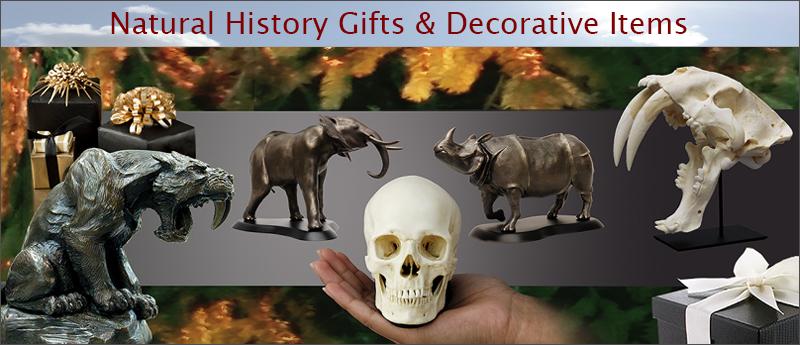 Natural History Gift Ideas