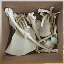 Mystery Bone Box