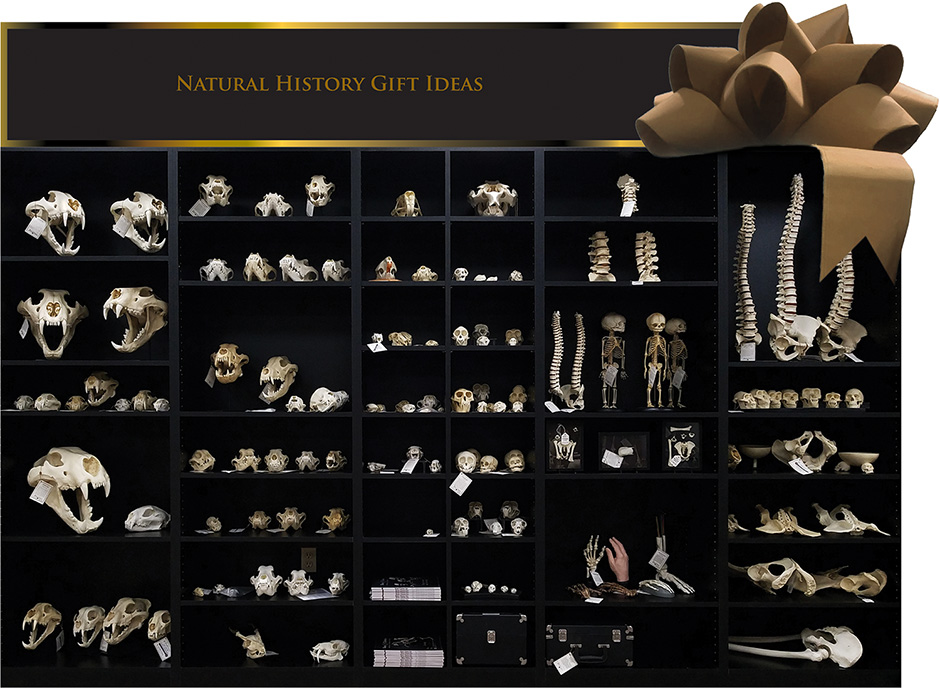 Natural History Gift Ideas