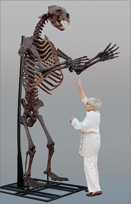 Short-faced Bear Skeleton
