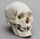 Male Polynesian Skull