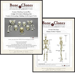 Forensic Osteology Set