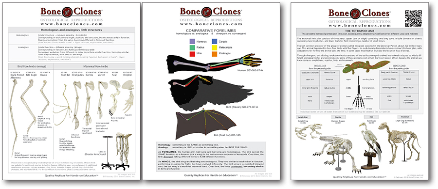 Comparative Forelimb Handout
