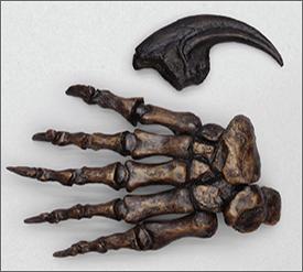 Fossil Postcranial Elements