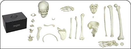 Male Bone Box